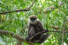 Affe auf einem Baum im Dschungel Lizenzfreie Stockfotografie