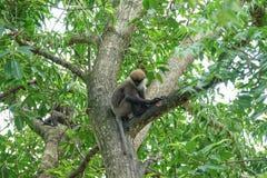 Affe auf einem Baum im Dschungel Lizenzfreie Stockbilder