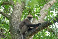 Affe auf einem Baum im Dschungel Stockfoto