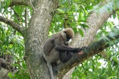 Affe auf einem Baum im Dschungel Stockfotografie