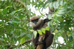 Affe auf einem Baum im Dschungel Lizenzfreie Stockfotos