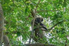 Affe auf einem Baum im Dschungel Stockfotos