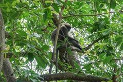 Affe auf einem Baum im Dschungel Stockbilder