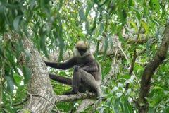 Affe auf einem Baum im Dschungel Stockbild