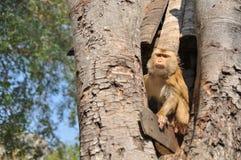 Affe auf einem Baum mit Naturhintergrund Stockfoto