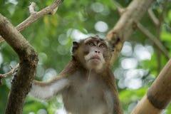 Affe auf einem Baumast Lizenzfreie Stockbilder