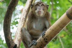 Affe auf einem Baumast Lizenzfreie Stockfotos