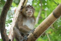 Affe auf einem Baumast Stockfotos