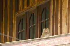 Affe auf einem Dach Stockbilder