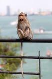 Affe auf einem Geländer Lizenzfreie Stockfotografie