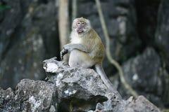 Affe auf einem grauen Felsen Lizenzfreie Stockfotografie