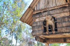 Affe auf einem Holzhaus mit Naturhintergrund Lizenzfreie Stockfotos