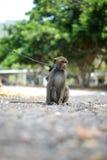 Affe auf einem Seil Stockbild