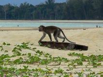 Affe auf einem Strand Lizenzfreie Stockfotografie