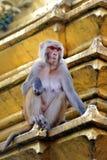 Affe auf einem Tempel. Swayambhunath, Nepal Lizenzfreie Stockfotografie