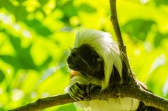 Affe auf einer Niederlassung Lizenzfreie Stockfotos