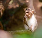 Affe auf einer Niederlassung Stockfotografie