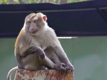Affe auf einer Niederlassung lizenzfreie stockfotografie