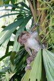 Affe auf einer Palme Lizenzfreie Stockfotos