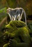 Affe auf einer Skulptur Lizenzfreie Stockbilder