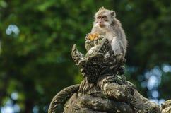 Affe auf einer Skulptur im Tempel Lizenzfreie Stockfotos