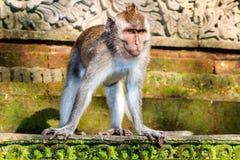 Affe auf einer Statue Lizenzfreies Stockfoto