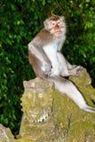 Affe auf einer Statue Lizenzfreie Stockbilder