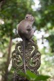 Affe auf einer Steinverzierung Stockbild