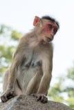 Affe auf Elephanta-Insel Lizenzfreies Stockbild