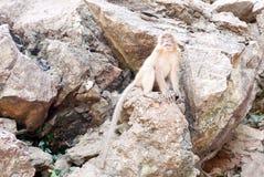 Affe auf Felsen in Thailand Lizenzfreie Stockfotografie