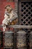 Affe auf Gebet dreht herein Nepal Lizenzfreie Stockfotografie