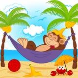 Affe auf Hängematte Stockfoto