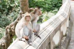 Affe auf Handlauf Lizenzfreie Stockbilder