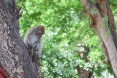 Affe auf selektivem Fokus des Baums in der Natur Stockfotografie