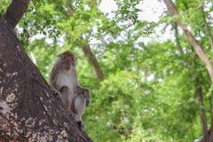 Affe auf selektivem Fokus des Baums in der Natur Lizenzfreie Stockbilder