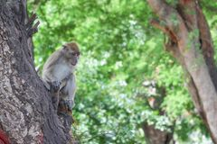 Affe auf selektivem Fokus des Baums in der Natur Lizenzfreies Stockbild