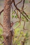 Affe auf Stamm Stockbilder