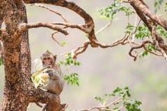 Affe auf Stamm Lizenzfreies Stockbild