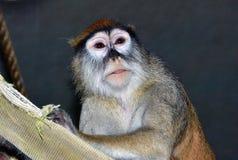 Affe auf Stange Stockfotos