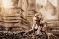 Affe auf Stein Lizenzfreies Stockfoto
