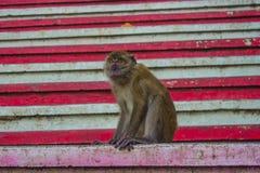 Affe auf Steinschritten Stockfoto