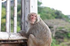 Affe auf Terrasse Lizenzfreie Stockfotos
