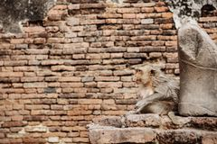 Affe auf Ziegelstein im Zoo Lizenzfreie Stockfotografie