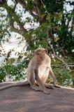 Affe an Auffrischungsatmosphäre auf dem Gipfel Lizenzfreies Stockbild