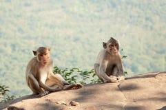 Affe an Auffrischungsatmosphäre auf dem Gipfel Stockfotos