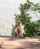 Affe an Auffrischungsatmosphäre auf dem Gipfel Lizenzfreies Stockfoto