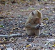 Affe aus den Grund Lizenzfreie Stockbilder