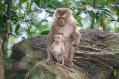 Affe-Baby-Affemutter Lizenzfreies Stockfoto