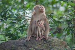 Affe-Baby-Affemutter Stockbilder