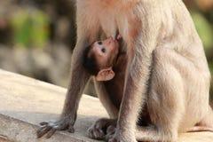 Affe-Baby mit Mutter Lizenzfreies Stockfoto